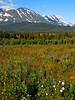 AK-2016-1288a Snow River Valley
