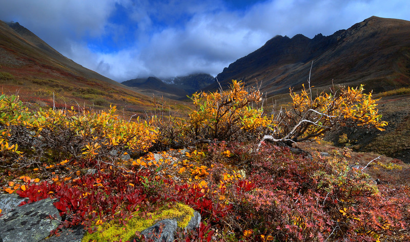 Tundra near Twin Lakes
