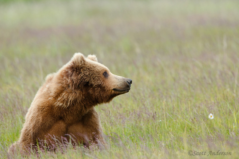 This bear looks so content.