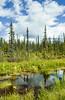 Scenic wetlands along the Glenn Highway, Alaska, USA.