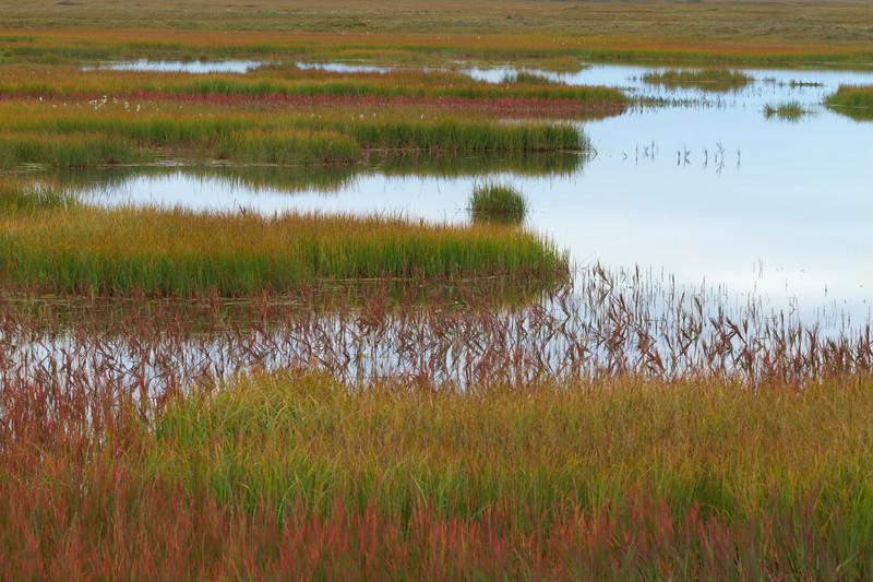 Tundra Pond, North Slope, Alaska