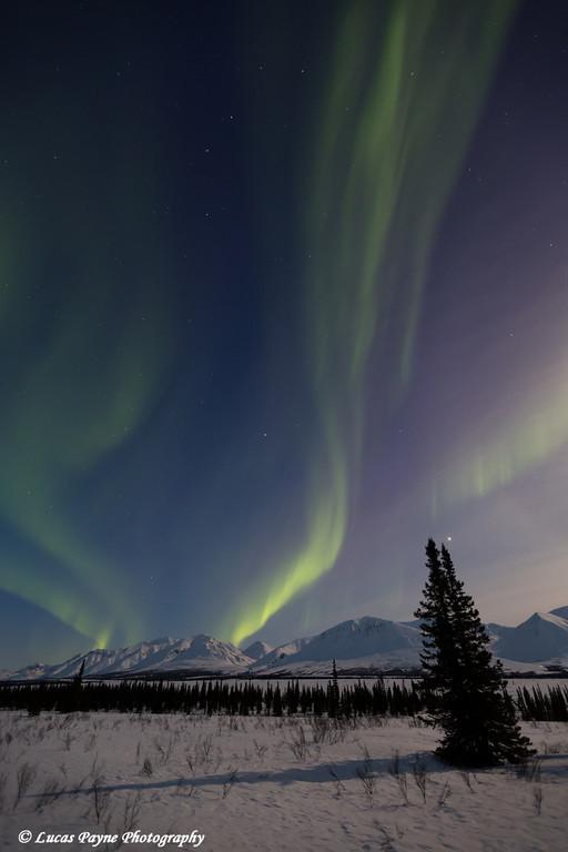 View of the Aurora Borealis (Northern Lights) dancing above the Alaska Range along the Parks Highway at Broad Pass, Interior Alaska.<br /> <br /> April 11, 2014