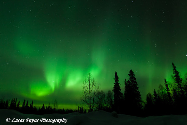 The green glow of the Aurora Borealis (Northern Lights) from the Petersville Road on the eve of St. Patricks Day<br /> March 16, 2012