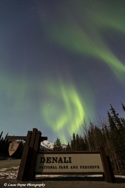 The Aurora Borealis (Northern Lights) dancing above the sign marking the entrance to Denali National Park and Preserve, Interior Alaska.<br /> <br /> April 12, 2014