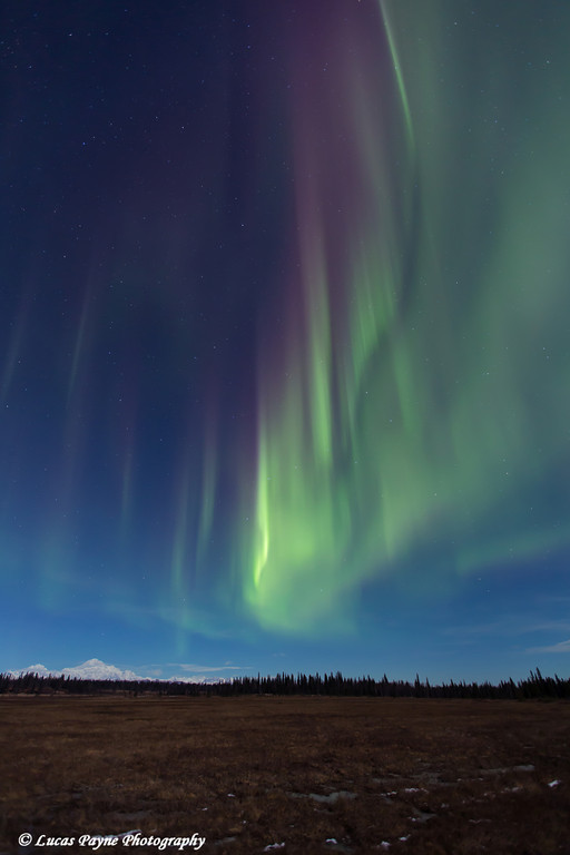 View of green and purple Northern Lights dancing in the sky above Mt. McKinley and the Alaska Range as seen from the Petersville Road, Southcentral Alaska<br /> <br /> <br /> November 01, 2012