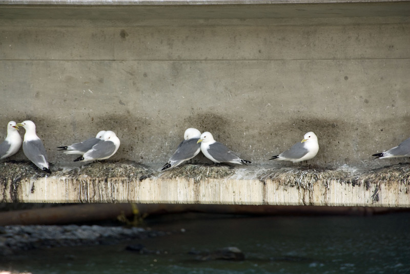 Shorebirds on a bridge trestle.