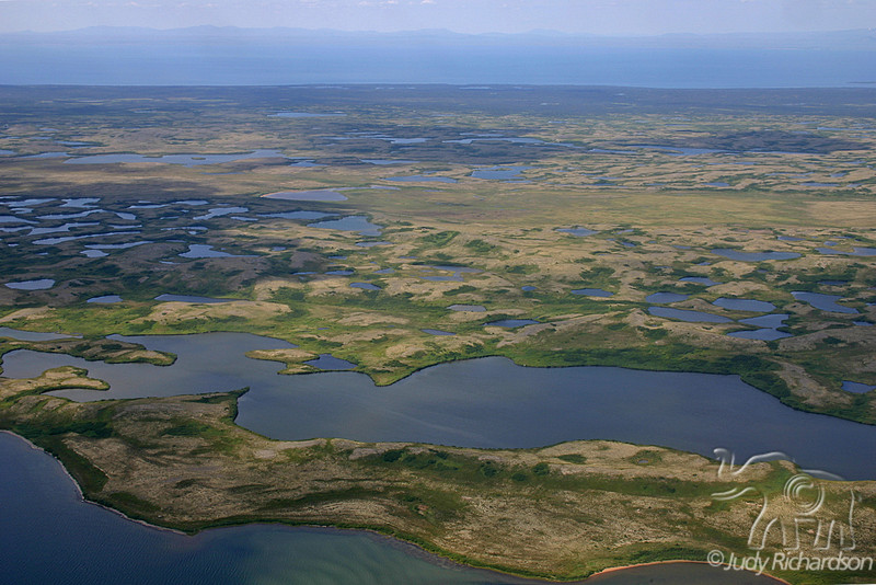 Boggy terrain with many ponds in Alaska