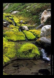 G27 Mossy Creek