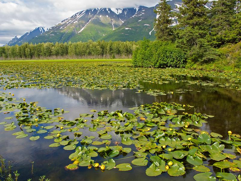 Lily Pad Lake.