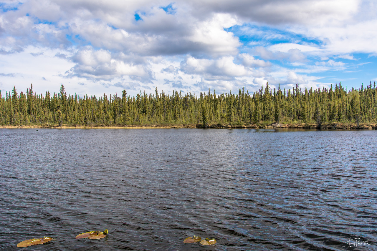 One of the small lakes in Glennallen