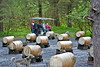 Group of visitors riding a cart as they witness the setup at Seavey's in Seward, Alaska.