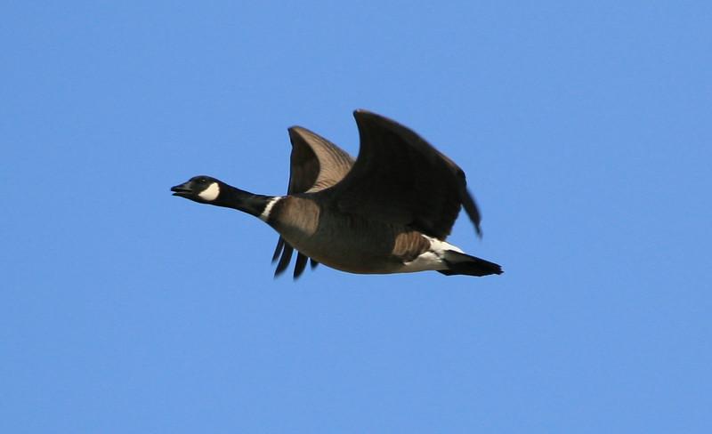 Goose Shemya Island, Alaska