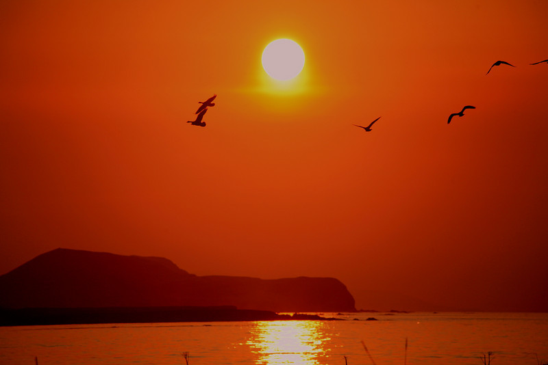 Geese flying into the sunset. Shemya Island, Alaska