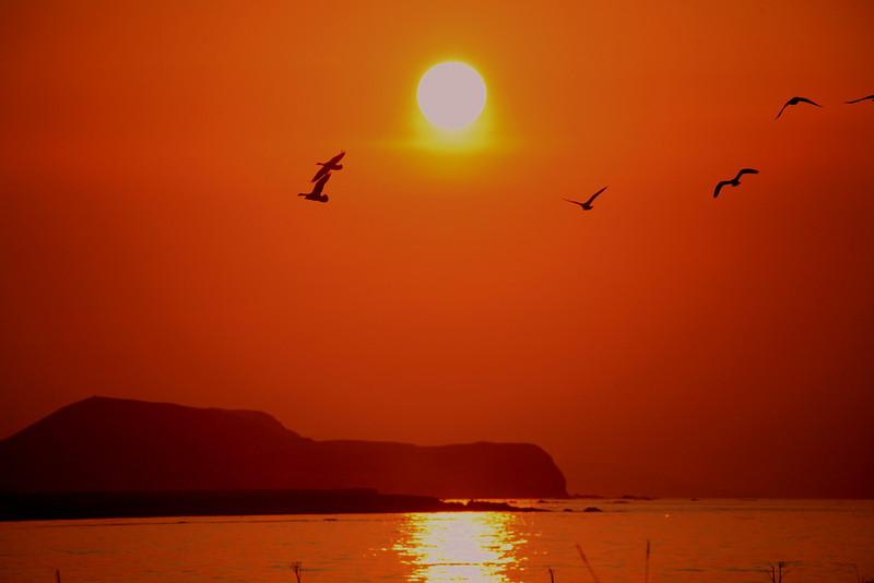 Geese flying into the sunset. Shemya Island, Alaska