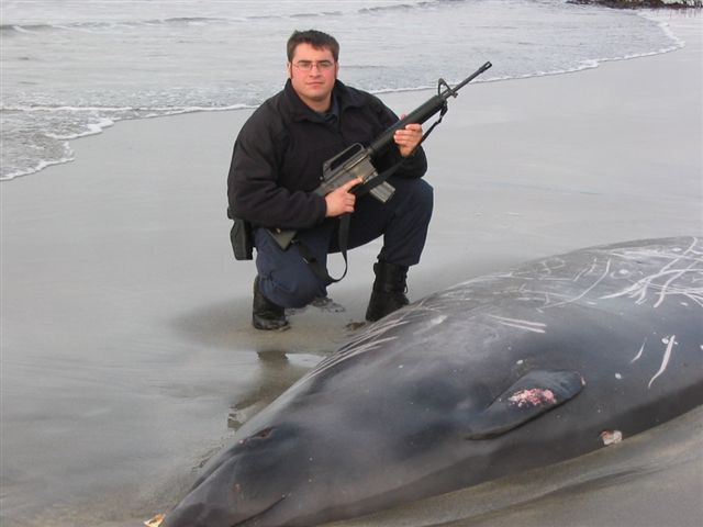 Me with beached Stejneger's Beaked Whale. NO, I DID NOT SHOOT THIS WHALE!!!