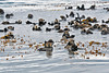 Raft of sea otters resting as they hold themselves in place with the sea weed