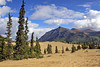 """Sand dunes known as the """"Carcross Desert"""", north of Carcross"""