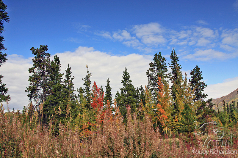 Changing colors along the highway to Carcross