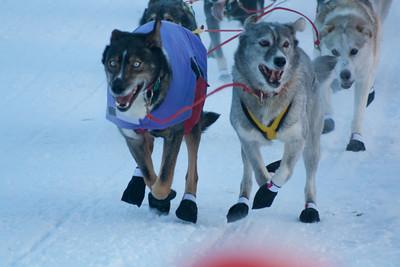 Sled Dog Races