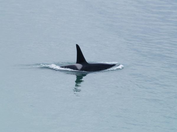 Southeast Alaska 2011