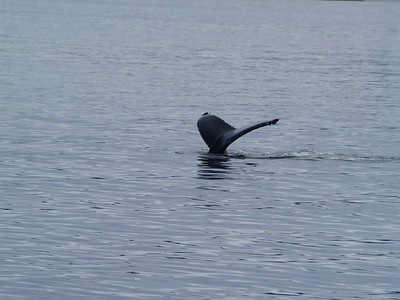 A run to Endicott Arm and Dawes Glacier - whales!
