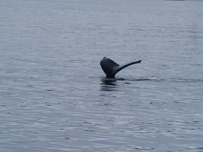 A run to Endicott Arm and Dawes Glacier - whales!