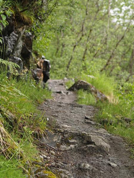 Herbert Glacier trail