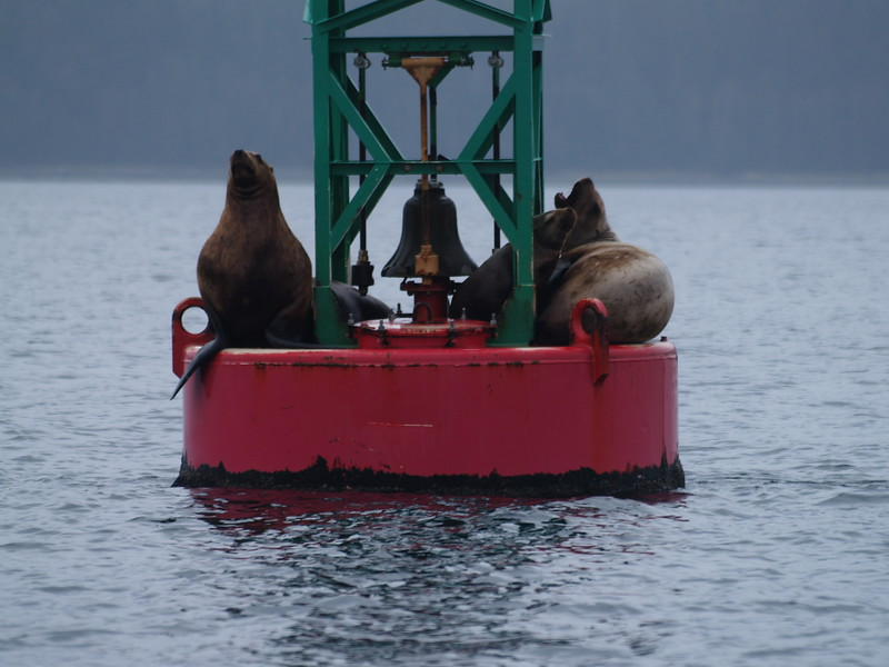 """The Can"" - buoy chained to Faust Rock, a hazard to navigation in Saginaw Channel. Stellar sea lion routinely haul out on it."