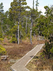 Point Bridget board walk