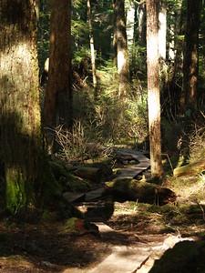 False Outer Point Trail - North Douglas Island