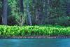AK-1984-s025a Talachulitna River