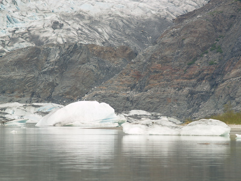 Baby `bergs from Mendenhall Glacier floating around in Mendenhall Lake (2007).