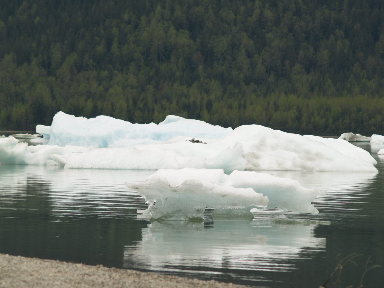 Little icebergs at Mendenhall Lake, Juneau (2007).