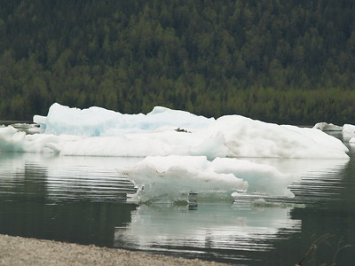Little icebergs at Mendenhall Lake, Juneau (2007).