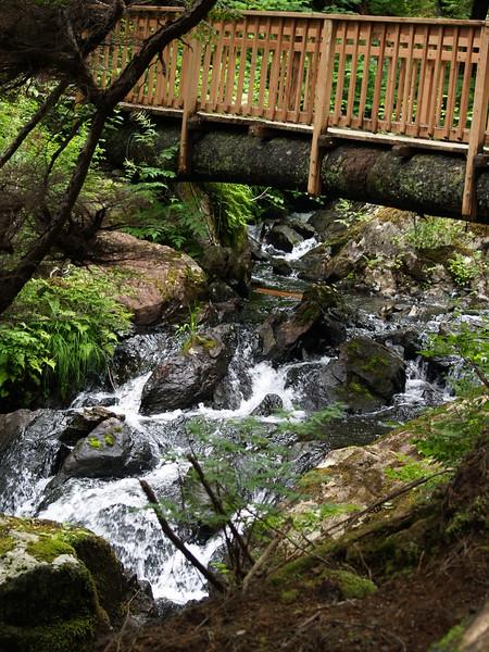 Thimbleberry Creek - July 2009