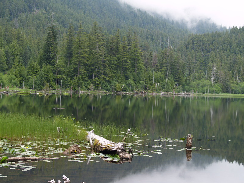 Thimbleberry Lake - July, 2009
