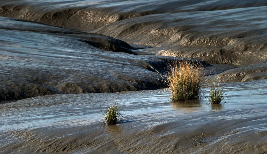 Bird Point Mudflats