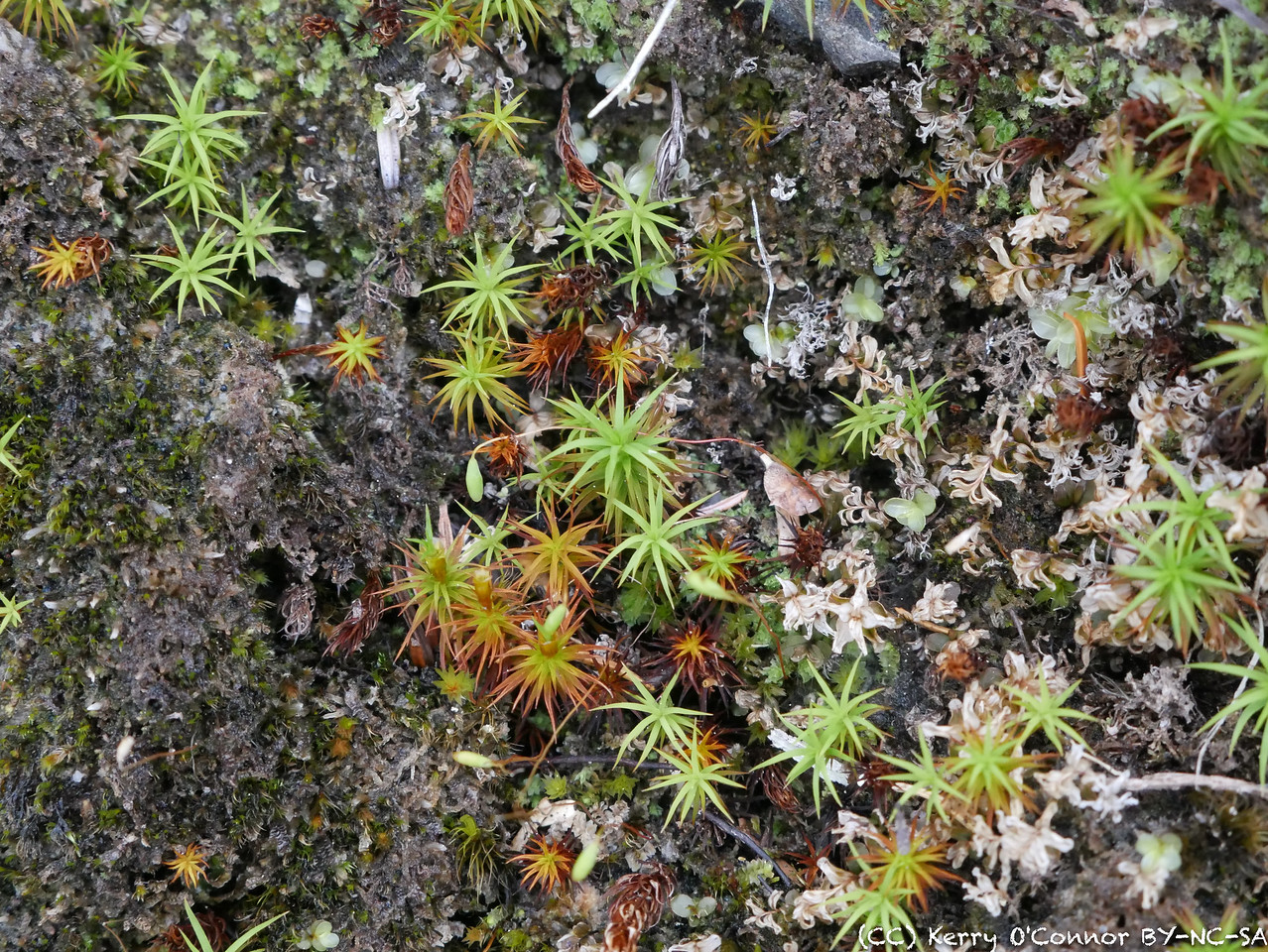 Moss near a Prince William Sound beach
