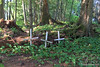 Wrangell Cemetery IP 18x12_7875