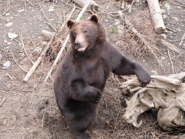 Hey there bear!