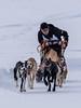 Sprinting dogs