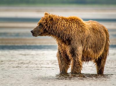 On Salmon Watch.