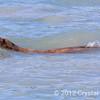 Sea lion near Valdez