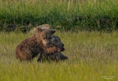 Cub Hugs