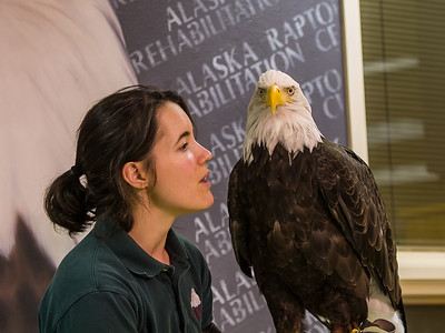 Alaska Raptor Rehab Center - Sitka