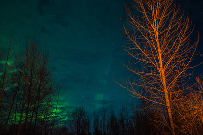 Tree lit by campfire and northern lights in Talkeetna, Alaska