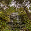Alaskan Rain Forest #2