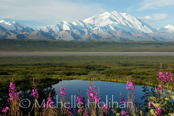 Denali and Fireweed