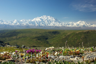 Denali from Camp Ridge