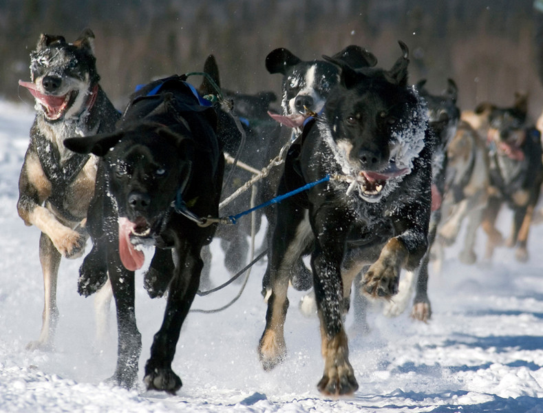 Sled Dogs Racing - Alaska & Northern Lights - John Remy - March 2007